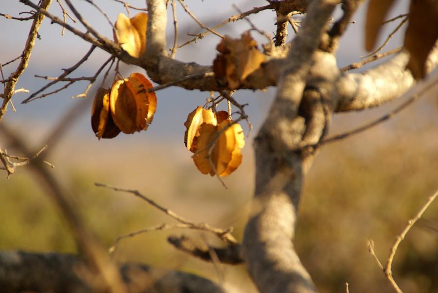 Südafrika Mpumalane