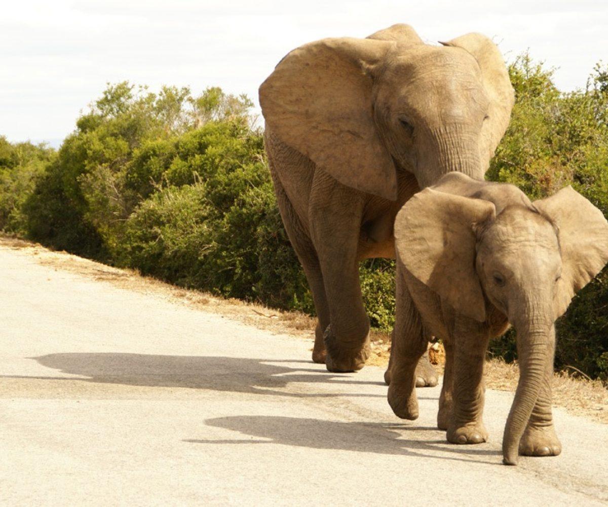 Südafrika Addo Elephant Parc