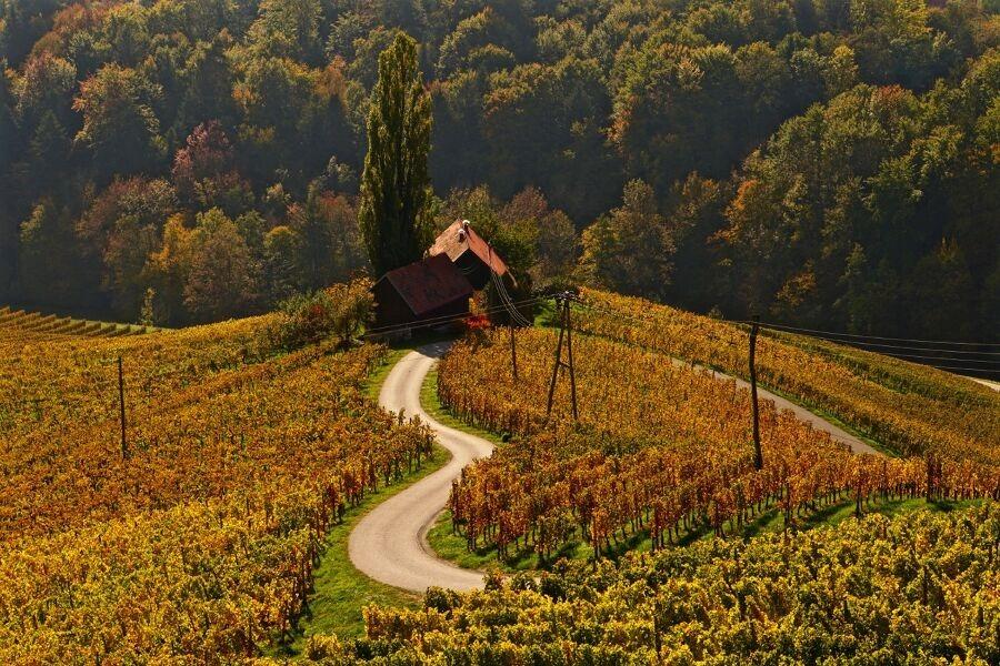 Sulztaler Weinwanderweg