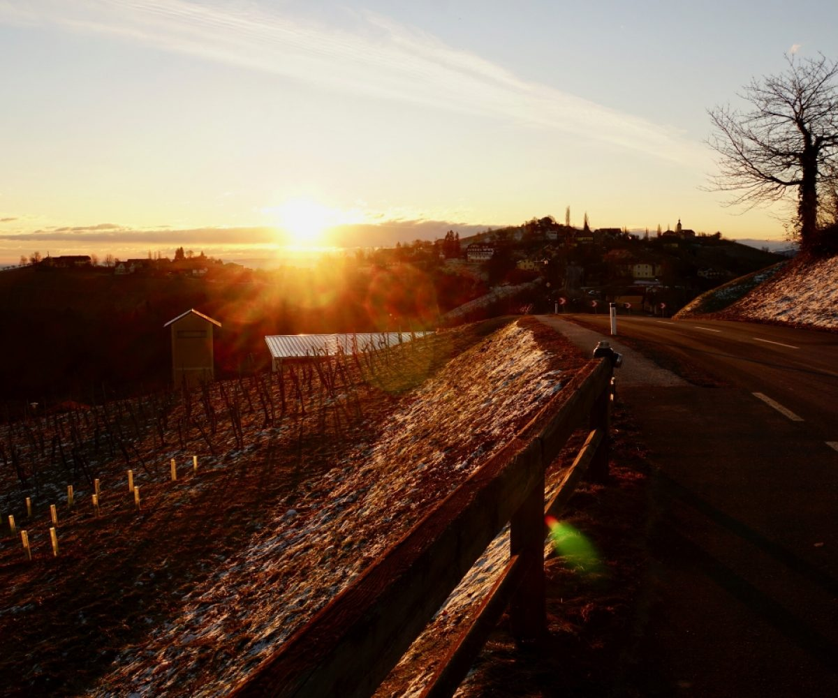 Sausal Sunrise